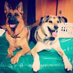 Detroit Dogs
